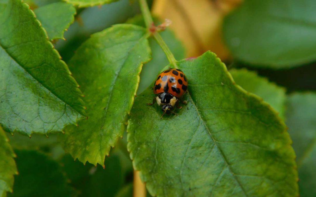 Hilfe für die Natur – Hecken statt Zäune