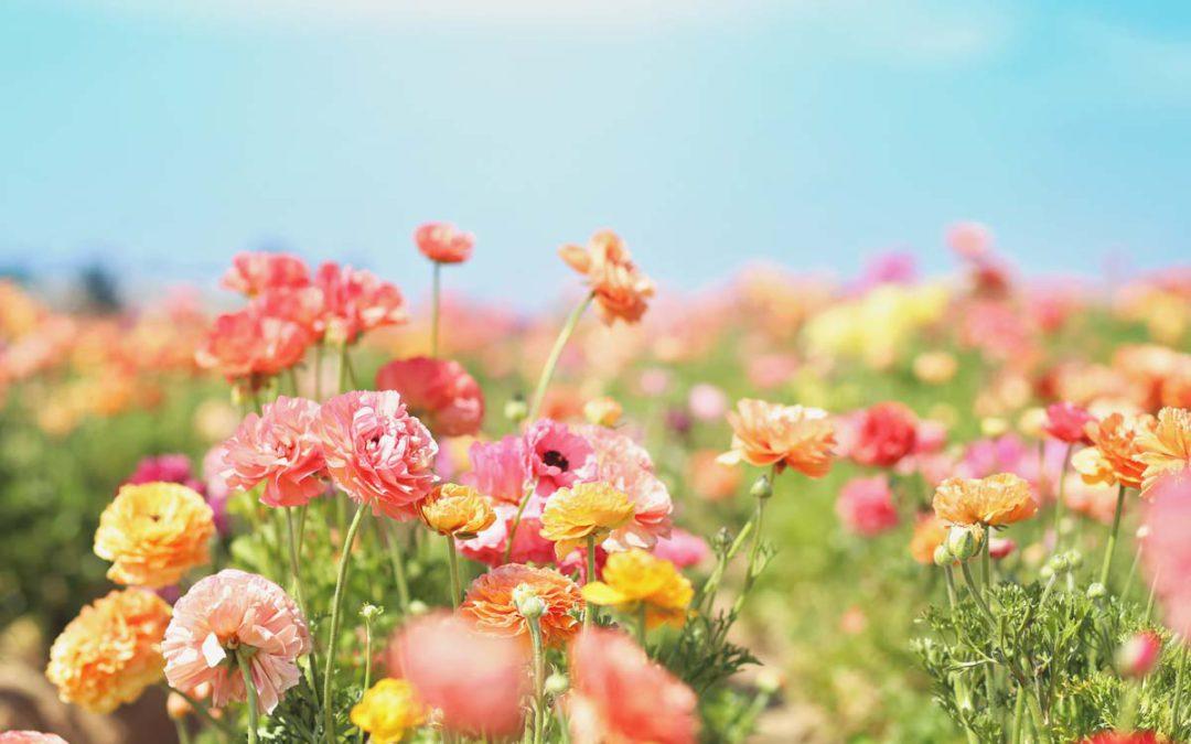 Frühlingsfarben in Haus und Garten bringen
