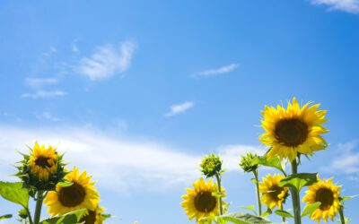 Sommerblumen für Ihr Garten